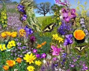 1000 Bloemen Bloeien
